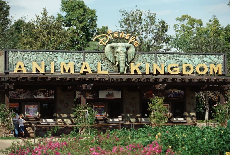 disney-animal-kingdom